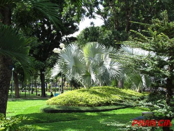 Cây xanh công viên Gia Định